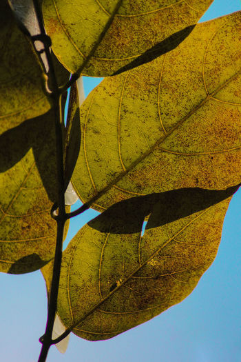 Close-Up Of Leaves Against Clear Sky