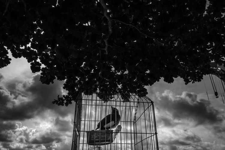 Low angle view of bird in cage against cloudy sky