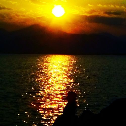 Sea Orange