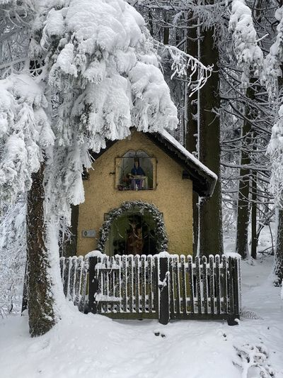Snow covered house and trees by building