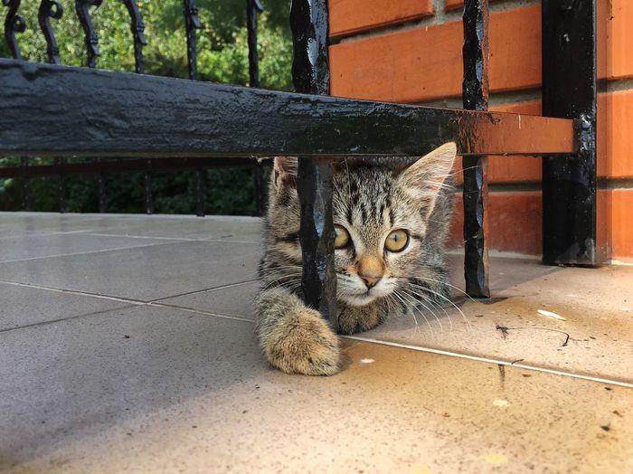 My Cat Cat Cats Cat♡ Animal Themes Mammal Feline Cat Animal Pets One Animal Domestic Animals No People Outdoors
