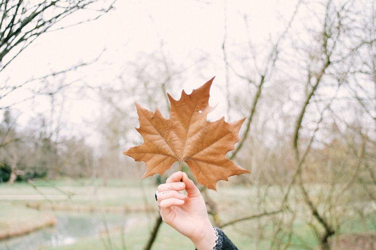 Autumn Canon Change Close-up Fujifilm Leaf Maple Maple Leaf Nature Tree Xt2
