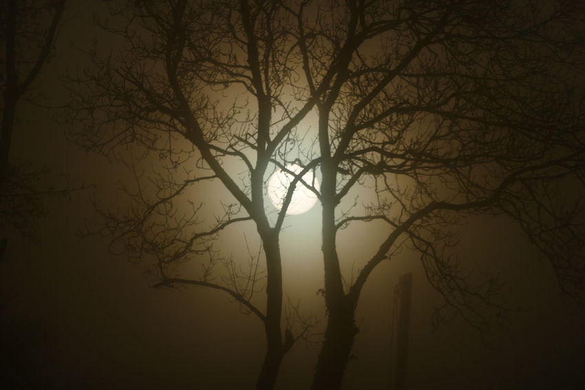 Foggy day.. Bare Tree Beauty In Nature Branch Day Dream States Ethereal Fog Foggy Foggy Weather Forest Nature No People Outdoors Scenics Silhouette Silhouette Silhouette_collection Sky Softness Sunset Tranquil Scene Tranquility Tree Tree Trunk Perspectives On Nature