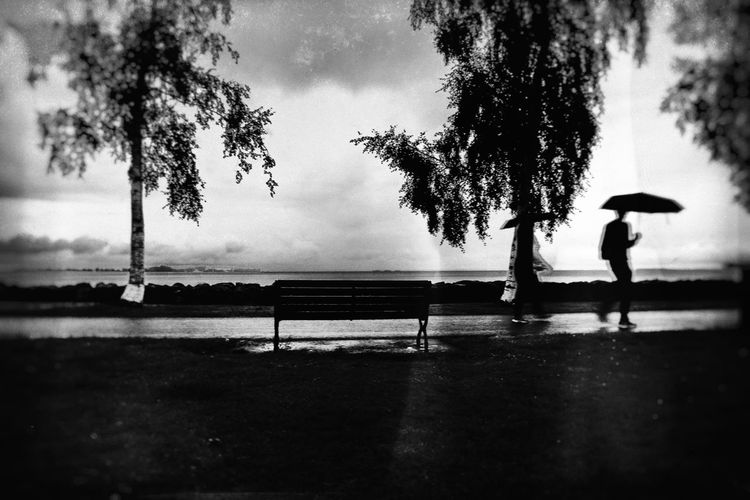 Silhouette man on bench in park during rainy season