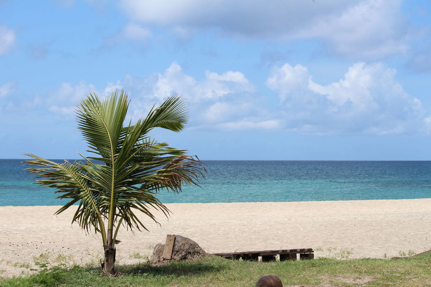 Beach Beauty In Nature Blue Cloud - Sky Day Growth Horizon Over Water Nature No People Outdoors Palm Tree Sand Scenics Sea Sky Tranquil Scene Travel Destinations Tree Tropical Climate Vacations Water