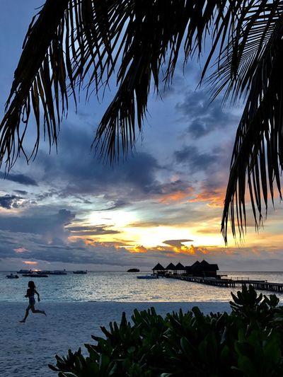 Sea Beach Palm