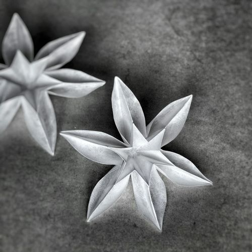 Primavera (Carmen Sprung) folded by me Check This Out Getting Inspired Flowers Origami Art Everyday Joy Black And White Monochrome Paperart White