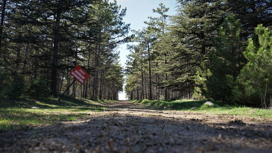 ODTÜ EyeEmNewHere EyeEm Best Shots EyeEm Gallery EyeEm Nature Lover Ankara Green Nature Odtü Road SONY A7ii Beauty In Nature Day Flag Forest Growth Nature No People Outdoors Patriotism Sky Stars And Stripes Tree