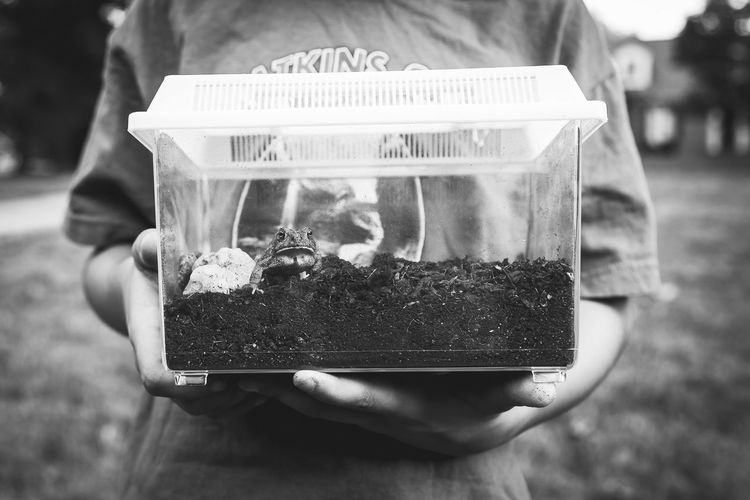 Midsection of boy holding toad in glass container on field