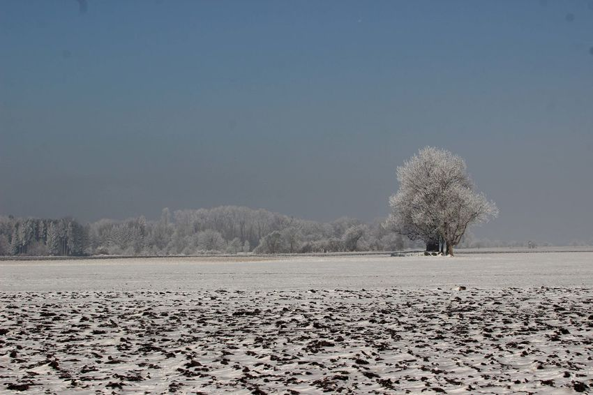 Blue Sky Cold Temperature Felder Im Winter Frosty Schneelandschaft Trees Winterlandschaft Wintertime