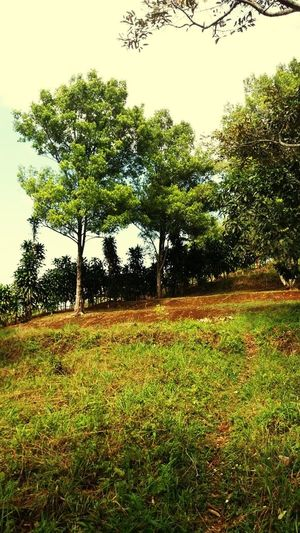 Tree Nature Growth Field Beauty In Nature Grass Agriculture EyeEm Ready   EyeEmNewHere AI Now Summer Exploratorium