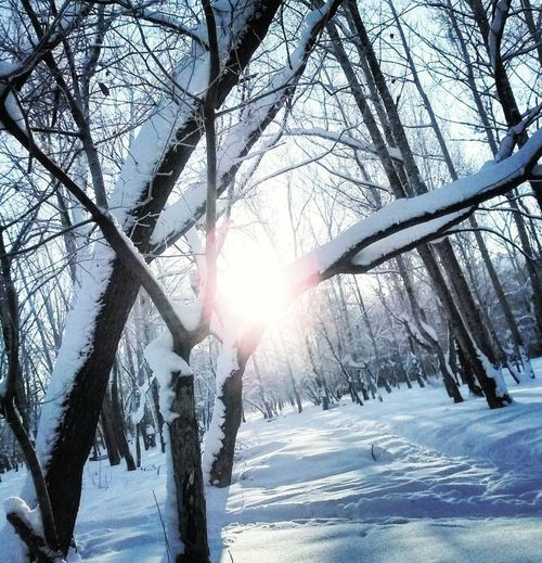 Great Winter Sun)) Winter