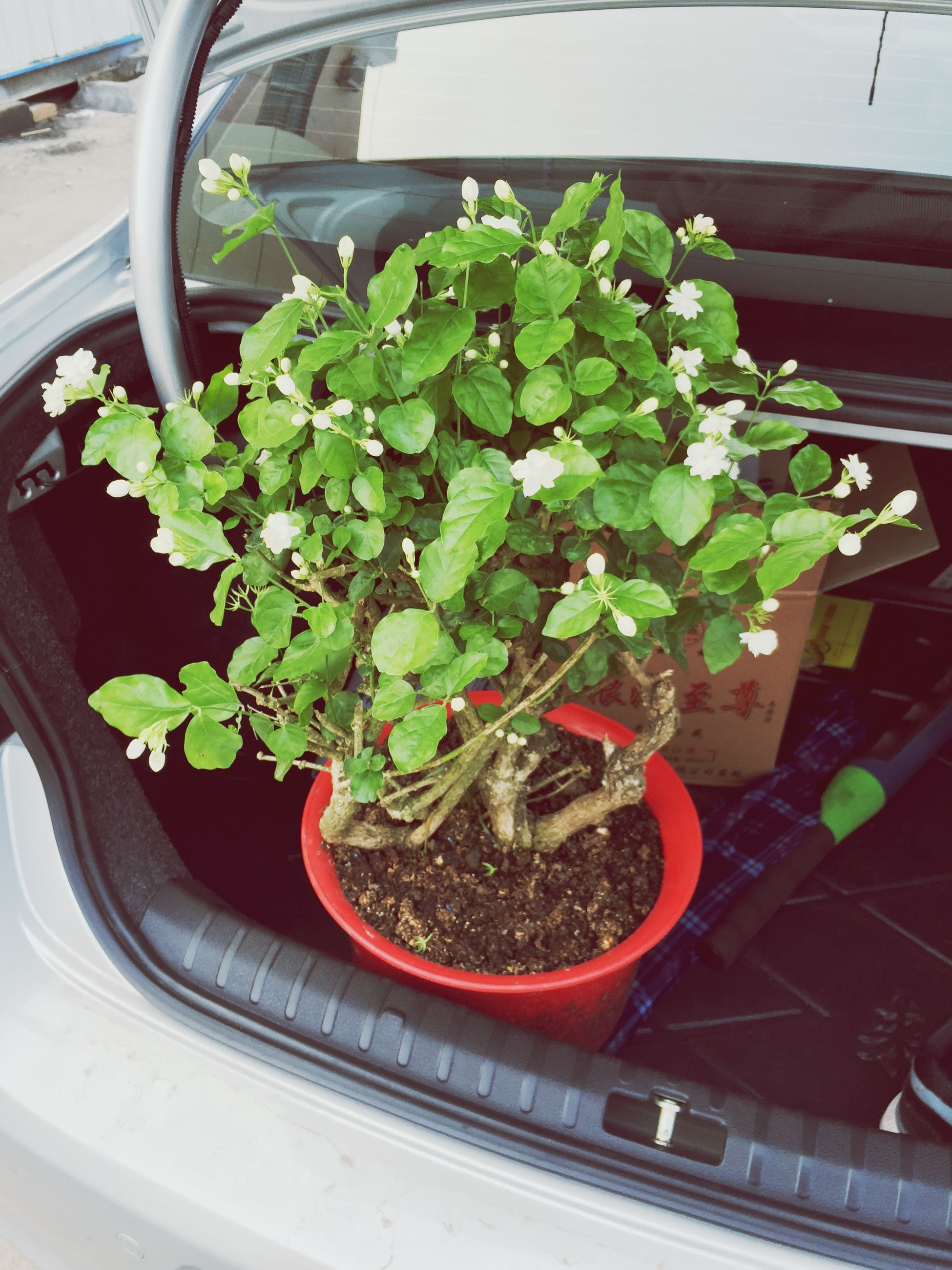 plant, flower, growth, potted plant, freshness, high angle view, leaf, nature, transportation, green color, fragility, land vehicle, mode of transport, beauty in nature, no people, day, close-up, front or back yard, car, outdoors