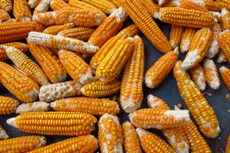 High Angle View Of Corns
