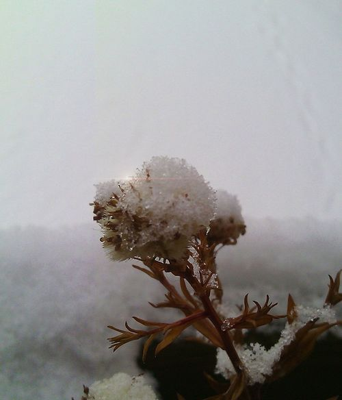 Ice Crystals Winter Plant
