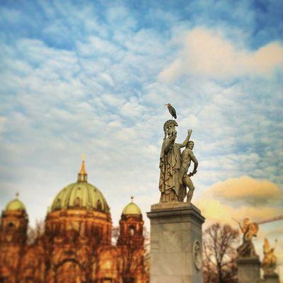 A visitor in Berlin Bird Deutschland Germany Ig_deutschland Ig_germany Ig_europe Insta_international Insta_europe Igs_world Igs_worldclub