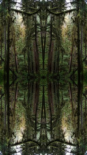 Digital composite image of trees in forest