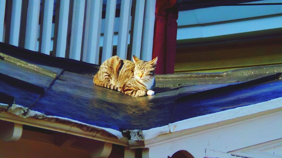 Cat On A Hot Tin Roof Sunning Cat Napping Spring Afternoon Perfect Shot Let Sleeping Cats Lie TabbyCat Enjoying Life OpenEdit Looking Up