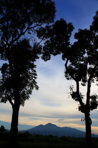 silhouette of Mount Galunggung Beauty In Nature Branch Day Growth Landscape Mount Galunggung Mountain Nature No People Outdoors Scenics Silhouette Sky Sunset Tasikmalaya Tranquil Scene Tranquility Tree Tree Trunk