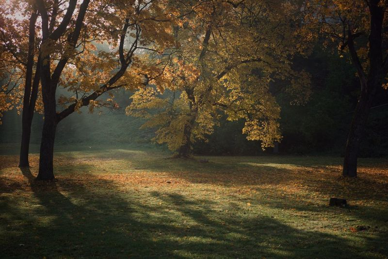 Autumn light EyeEm Best Shots Park Tree Plant Autumn Beauty In Nature Land Tranquility Nature Scenics - Nature Tranquil Scene Forest Tree Trunk Idyllic Landscape