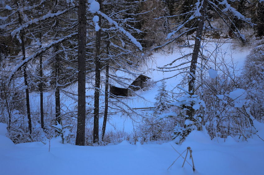 Secluded Little alpine cabin. Alps Bare Tree Blue Hour Cabin Chalet Cold Temperature Dusk Miles Away Betterlandscapes EyeEm Nature Lover Forest Hut Loneliness Lonely Nature Nightfall No People Outdoors Prättigau Remote Secluded  Snow Switzerland Weather Winter