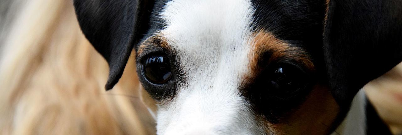 Close-Up Portrait Of Dog Eyes