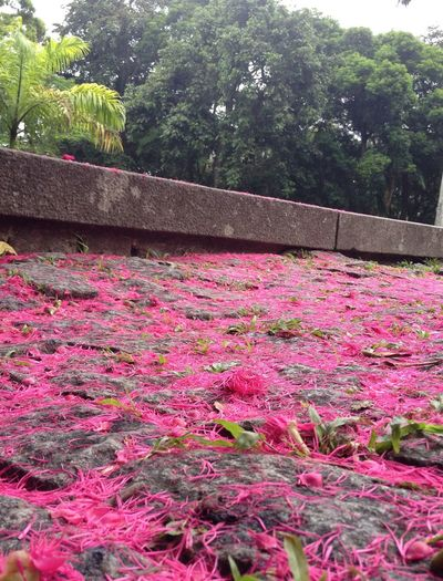 Parque Lage RJ Flowers On The Ground