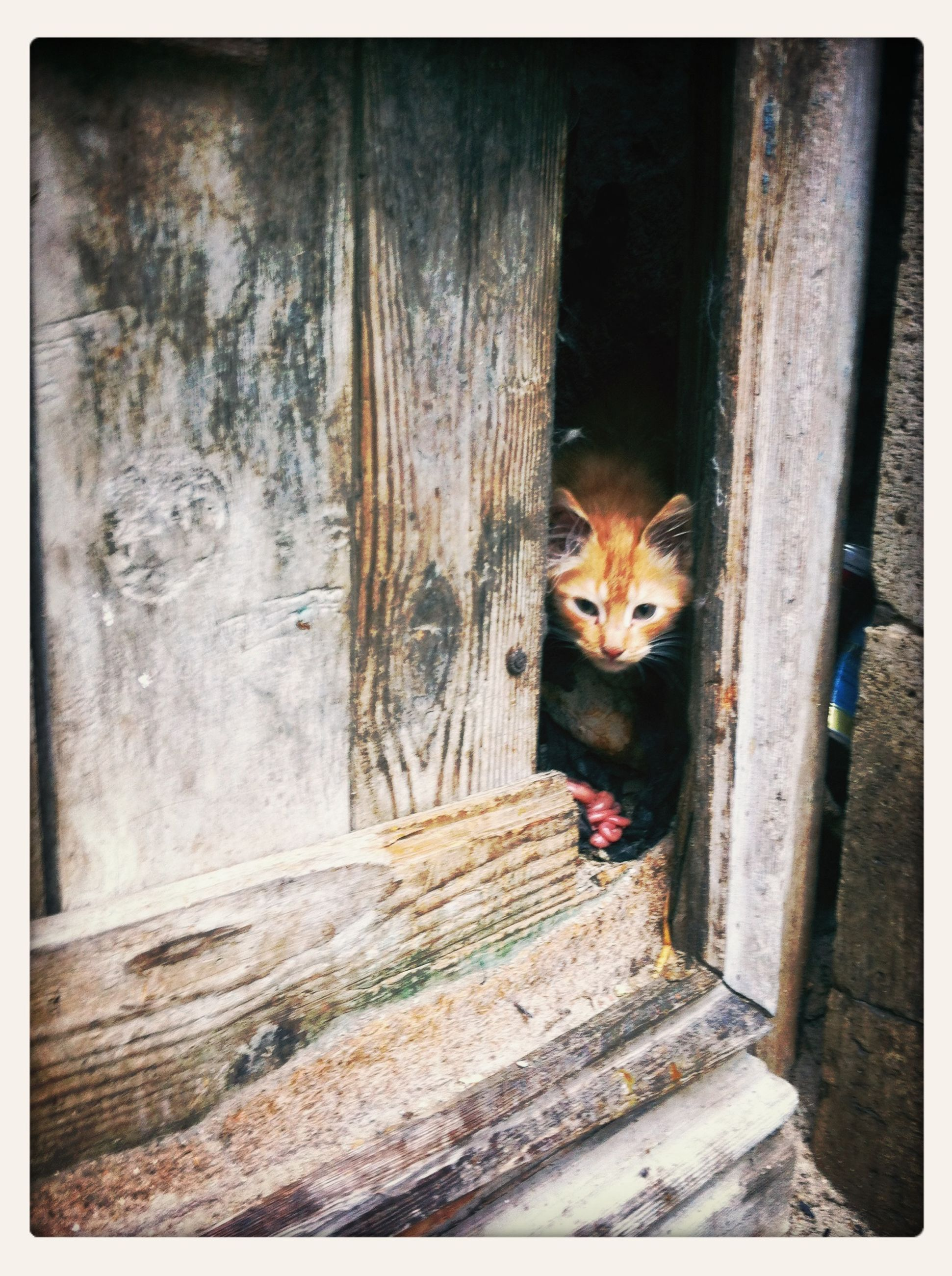 animal themes, one animal, wood - material, mammal, domestic animals, wooden, door, wildlife, pets, animals in the wild, wood, cat, domestic cat, feline, outdoors, plank, house, sitting, day, fence