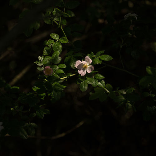 New Life in The Forest Beauty In Nature Blooming Close-up Day Flower Flower Head Forest Fragility Freshness Green Color Growth Leaf Light Puddle Low Light Photography Nature No People Outdoors Plant