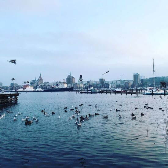 Water Bird Animals In The Wild Group Of Animals Sky Vertebrate Animal Themes Animal Wildlife Animal Waterfront Large Group Of Animals Nautical Vessel Transportation Flying Nature Day Sea No People Mode Of Transportation Outdoors