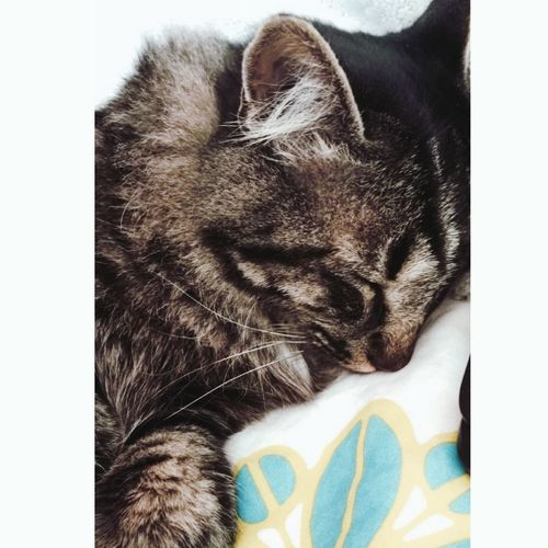 Cat 🐯