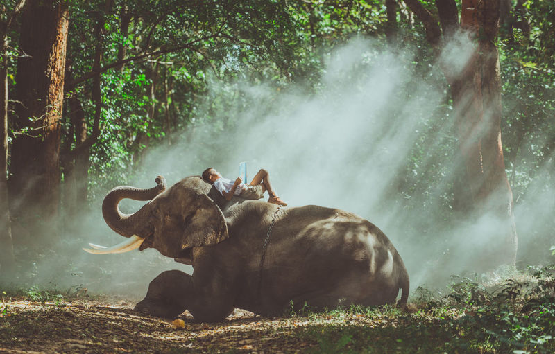 Boy reading book while lying on elephant in forest