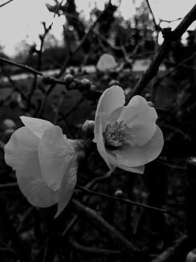#darkness #Dark #emo #grudge Flower Nature Petal Fragility Growth Beauty In Nature Flower Head Day Focus On Foreground Plant Outdoors No People Close-up Freshness Tree