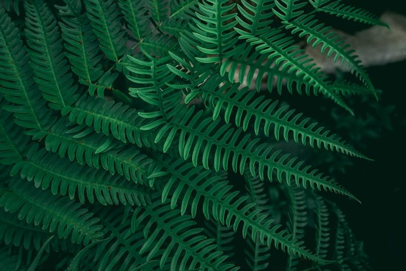 Fern at Bhubing Palace Green Color Plant Part Leaf Fern Growth Plant Full Frame Tree No People Nature Beauty In Nature Natural Pattern First Eyeem Photo