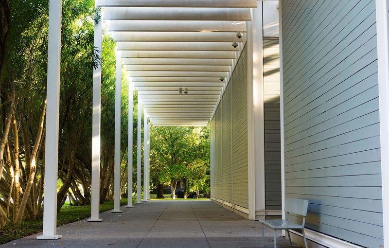 Corridor Along Trees