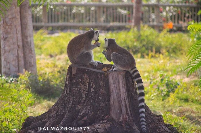 Animal Animals In The Wild No People Focus On Foreground Animal Themes Animal Wildlife Day Outdoors Sitting Nature Perching Togetherness Tree Mammal Close-up