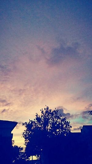 Tree Outdoors Dramatic Sky Stromy Night