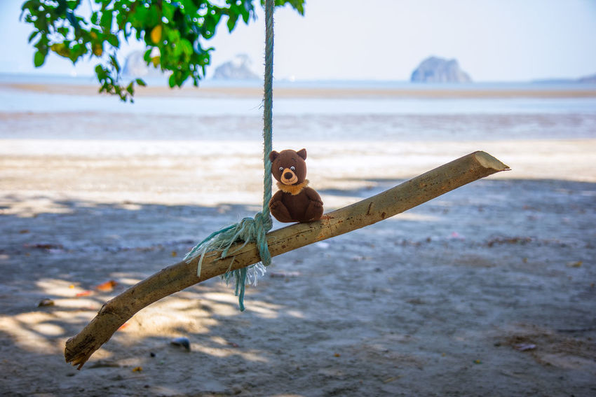Trang Thailand Family Family❤ Trang | Thailand Animal Animal Themes Animal Wildlife Animals In The Wild Beach Close-up Dall Day Focus On Foreground Land Nature No People One Animal Outdoors Plant Sand Sea Seascape Trang Tree Vertebrate Water
