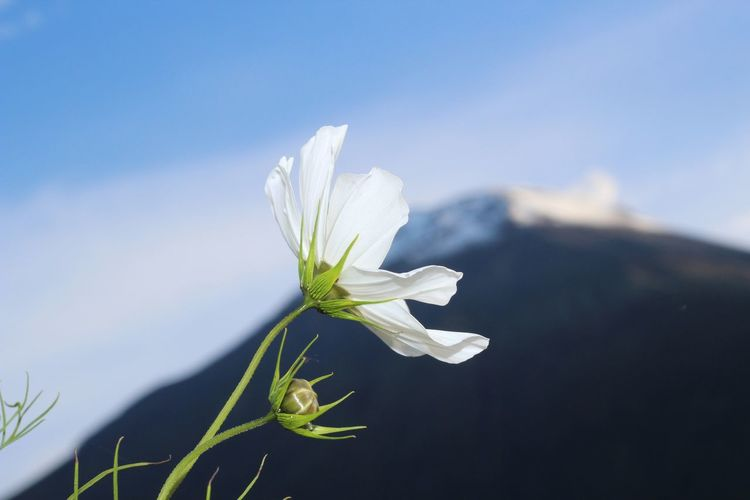 Beautiful Baños Beauty In Nature Blooming Blue Close Up Close-up Day Delicate Ecuador Flower Flower Head Fragility Freshness Growth Nature No People Outdoors Petal Plant Selective Focus Sky Snowdrop # EyeEmNewHere White Color