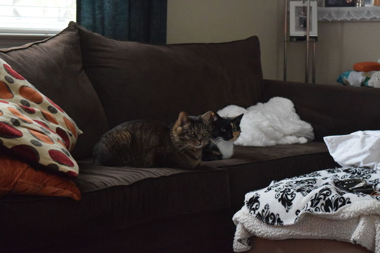 Two cats sitting on sofa