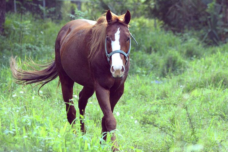 Horse next door