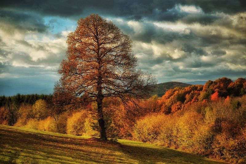 Nature Sky Tree Cloud - Sky Beauty In Nature Scenics Tranquility Landscape Tranquil Scene No People Field Autumn Bare Tree Outdoors Growth Change Grass Day Austria Vienna Alps Capture The Moment Daily Inspiration A Photo Like A Painting
