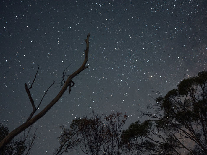 Tree Night Sky Plant Star - Space Scenics - Nature Bare Tree Low Angle View Branch Tranquility Space Star Nature Beauty In Nature No People Tranquil Scene Astronomy Star Field Constellation Trunk Outdoors Space And Astronomy