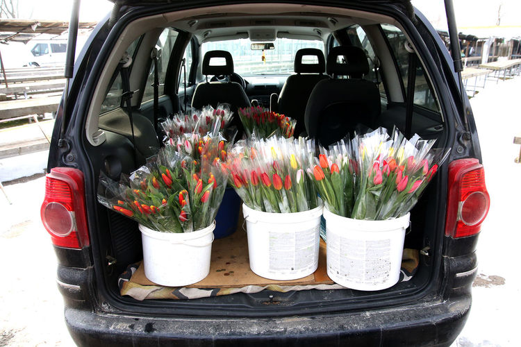 Potted plants in parking lot
