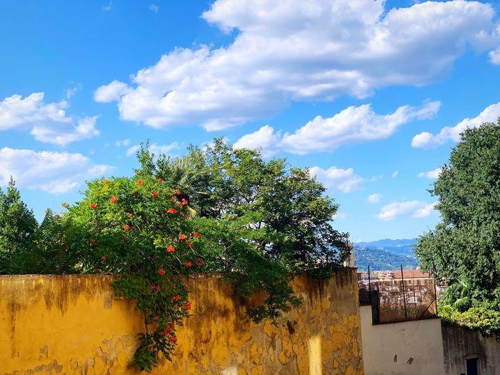 Plant Cloud -