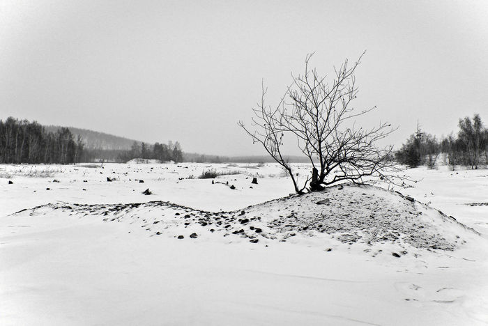 Bare Tree Bw Cold Temperature Landscape Non-urban Scene Outdoors Snow Tranquil Scene Tree Weather Winter Карабаш