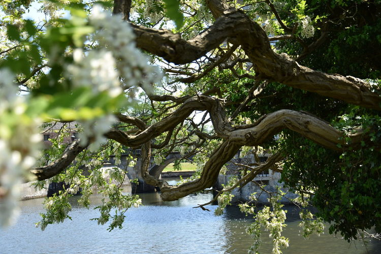 Nature Beauty In Nature Branch Day Forest Green Color Growth Lake Nature No People Outdoors Plant Plant Part Scenics - Nature Tranquility Tree Tree Trunk Trunk Water