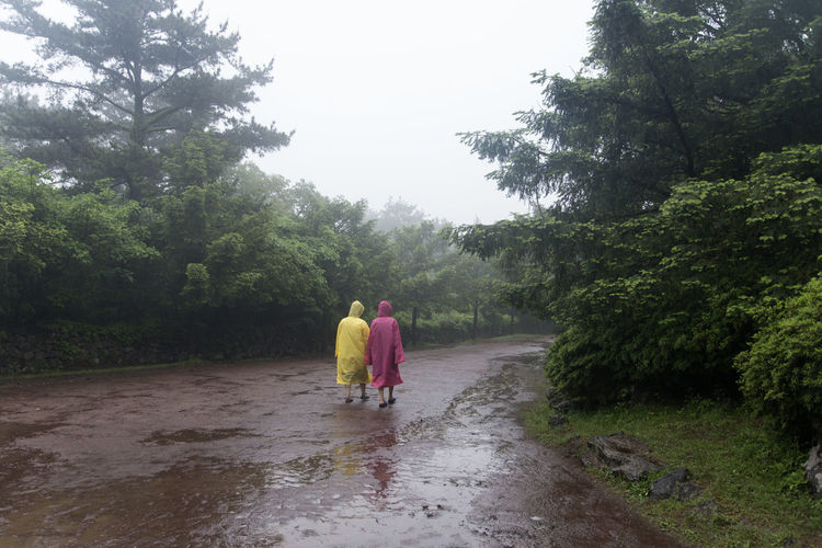 rainy day of Bijarim which is a famous forest in Jeju Island, South Korea Beauty In Nature Bijarim Day Forest Friendship Full Length Growth JEJU ISLAND  Leisure Activity Lifestyles Men Nature Outdoors Pathway People Rain Real People Rear View Sky Togetherness Tree Two People Walking Water Women