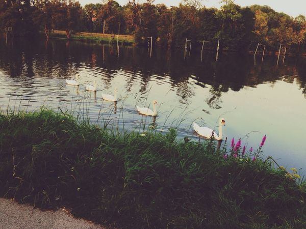 Beautiful beauty Park Taking Photos