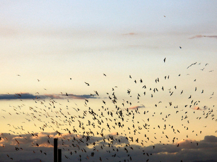 Flock Of Seagulls Perching On Silhouette Birds Flying In Sky During Sunset